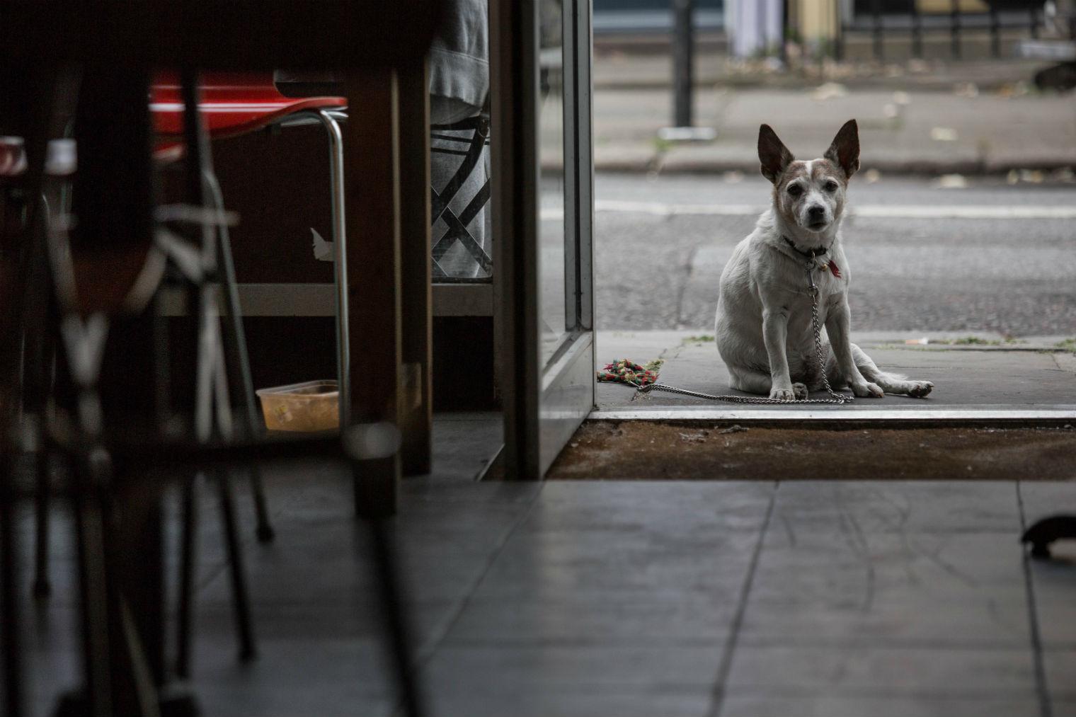 A regular visitor to Mario's. Photo: Dan Hall