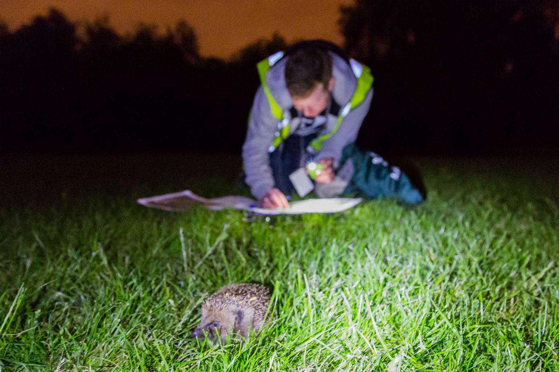 Hedgehogging. Photo: Matt Haworth
