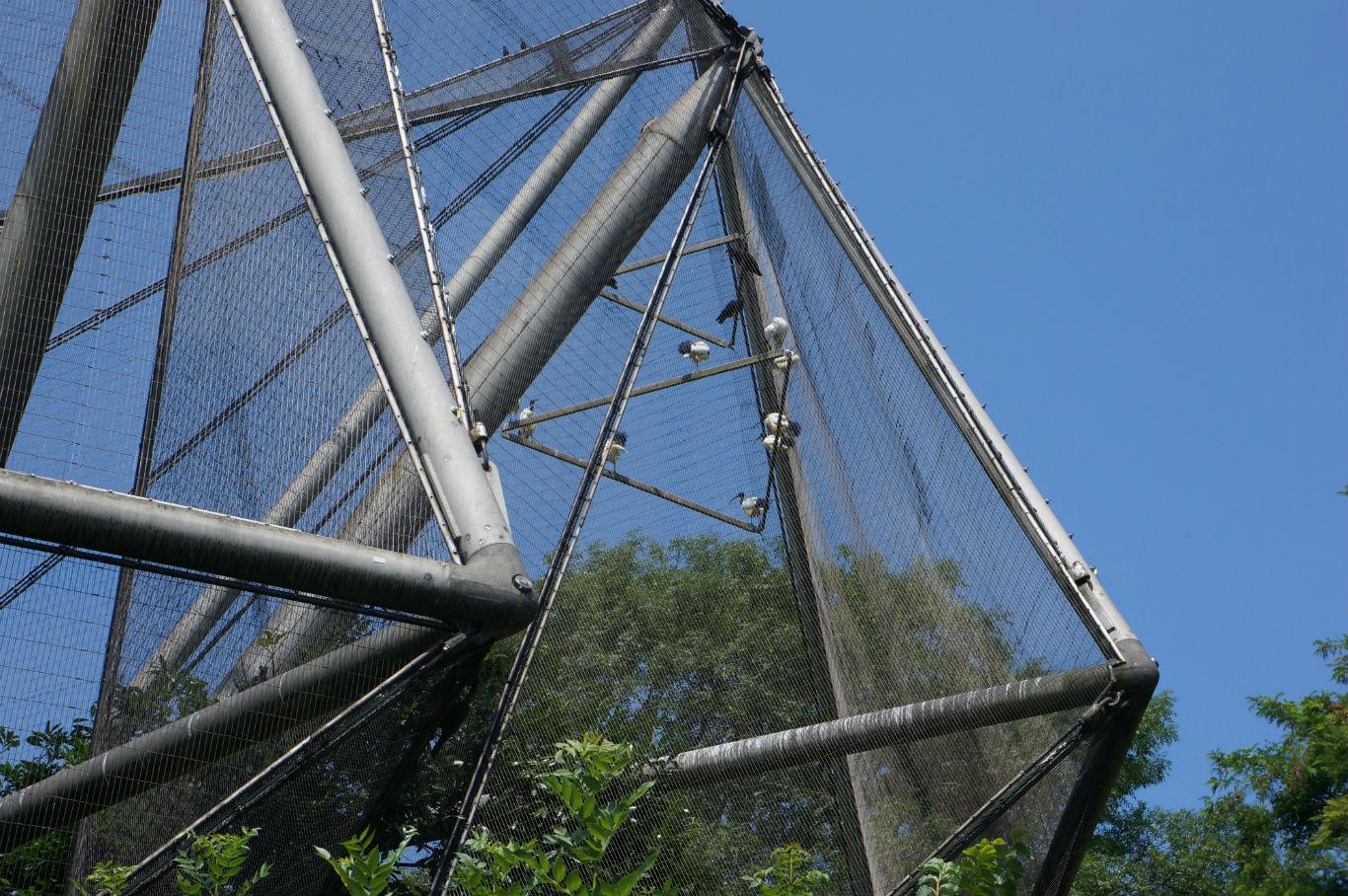 London Zoo aviary